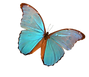 Lucie Legare's Blue Morpho Butterfly in sign of life's transformation