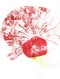 fleurs0372dpi.jpg