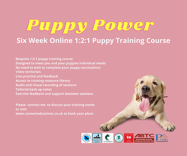 Lock Down Puppies-puppy-power.png