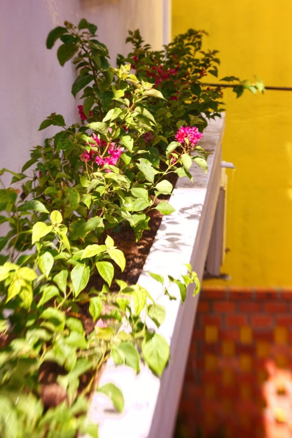 The bougainvillea flower box and sunshine wall at the Gratitude Vietnam Retreat Center