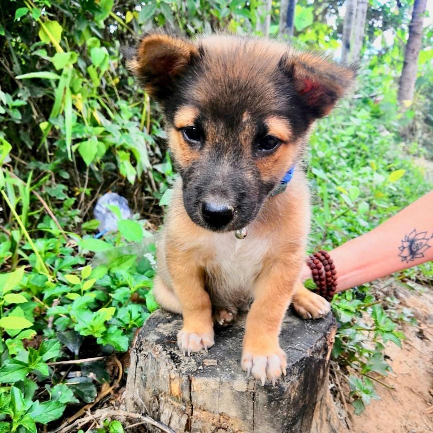 Gratitude Vietnam retreat venue puppy, Hoi An