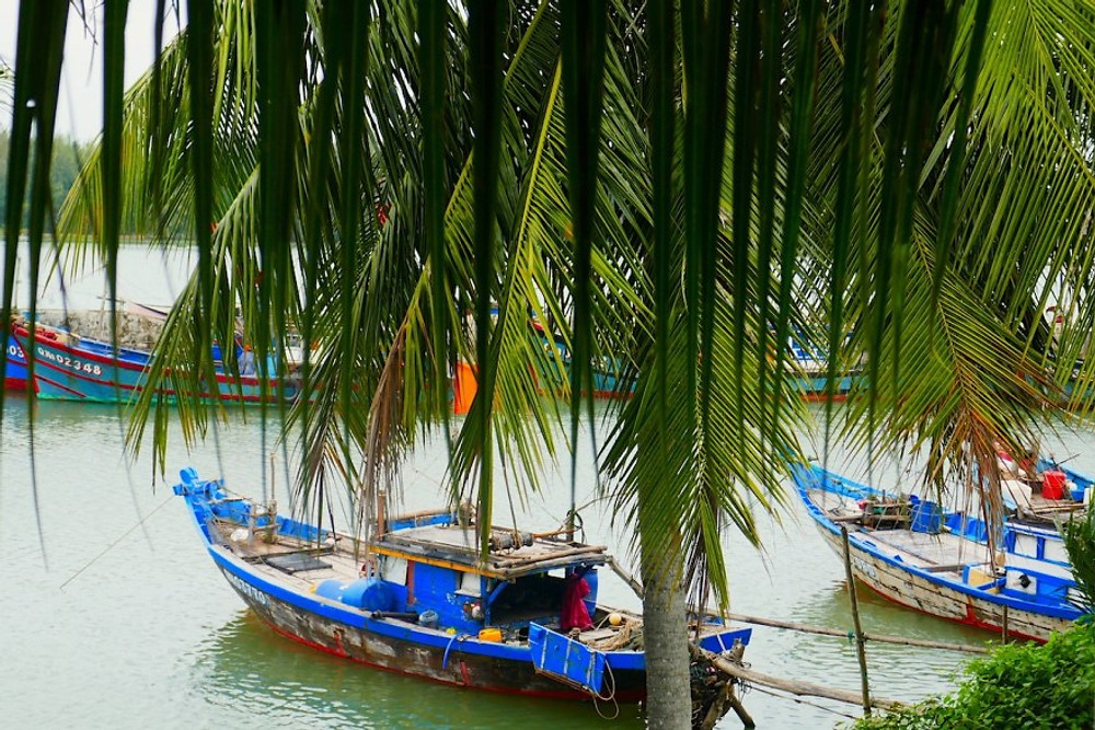 A balcony view of the River Thu Bon in Hoi An. Three fishing boats are slightly hidden by the fronds of a coconut tree!