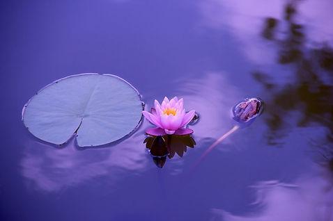 Introduction to Mindfulness retreat Hoi