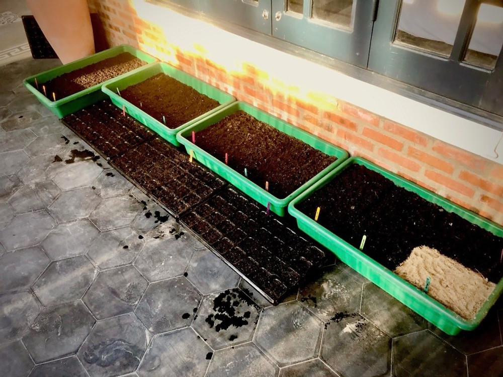 A photograph of seeds planted at the Gratitude Vietnam Retreat Center to produce home grown herbs, chillies, garlic and edible flowers.