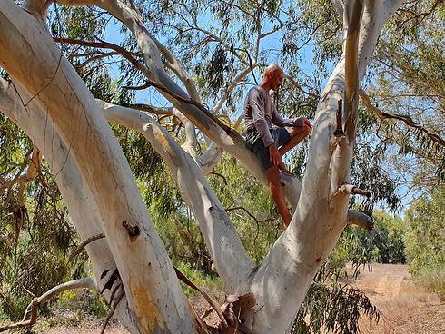 בועז על העץ.jpeg