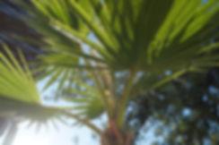 palmboom in de tuin van Quinta da Vida