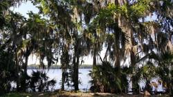 Lake view through palm trees