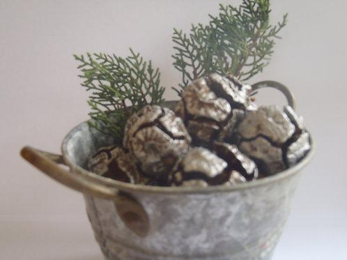 5 Silver Macrocarpa Cones