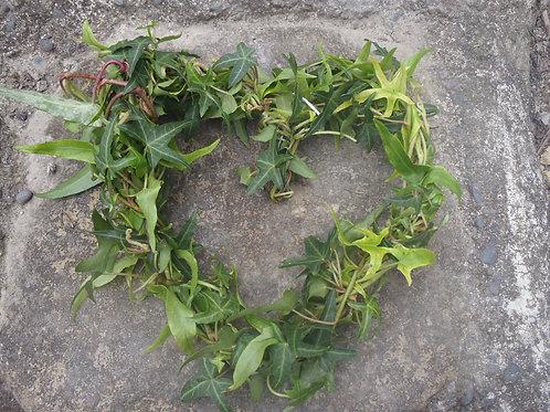Ivy Fidelity Heart