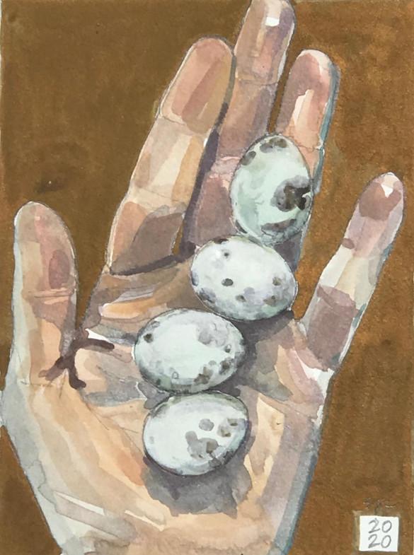 Luna's Eggs