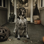 Doggie Aficionado Magazine