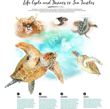 Life Cycle and Threats to Sea Turtles