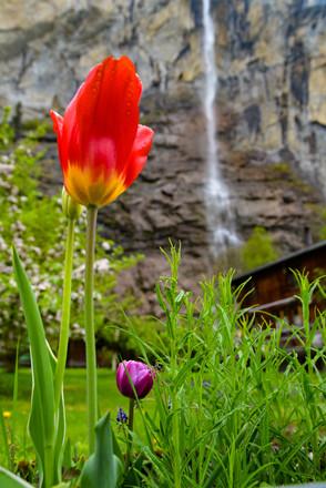 Lauterbrunnen Waterfall in Spring