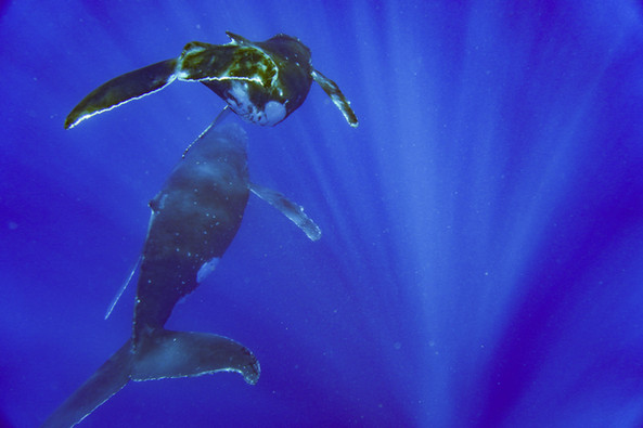 Travel is the Cure - Swimming with Whale