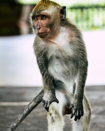 Monkey Forest, shot with my Nikon