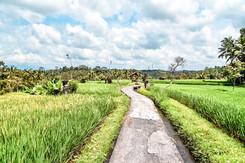 Ubud Rice Fields, shot with a GoPro