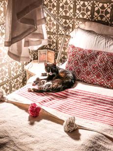 Riad BE Marrakech - Resident Cat