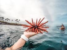 Hawaii Urchin, shot with a GoPro