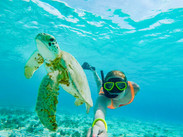 Turtles in Curacao