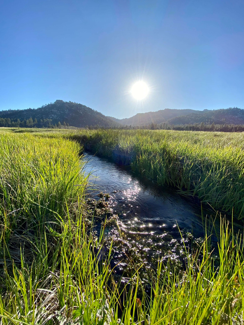 Manter Meadow Creek