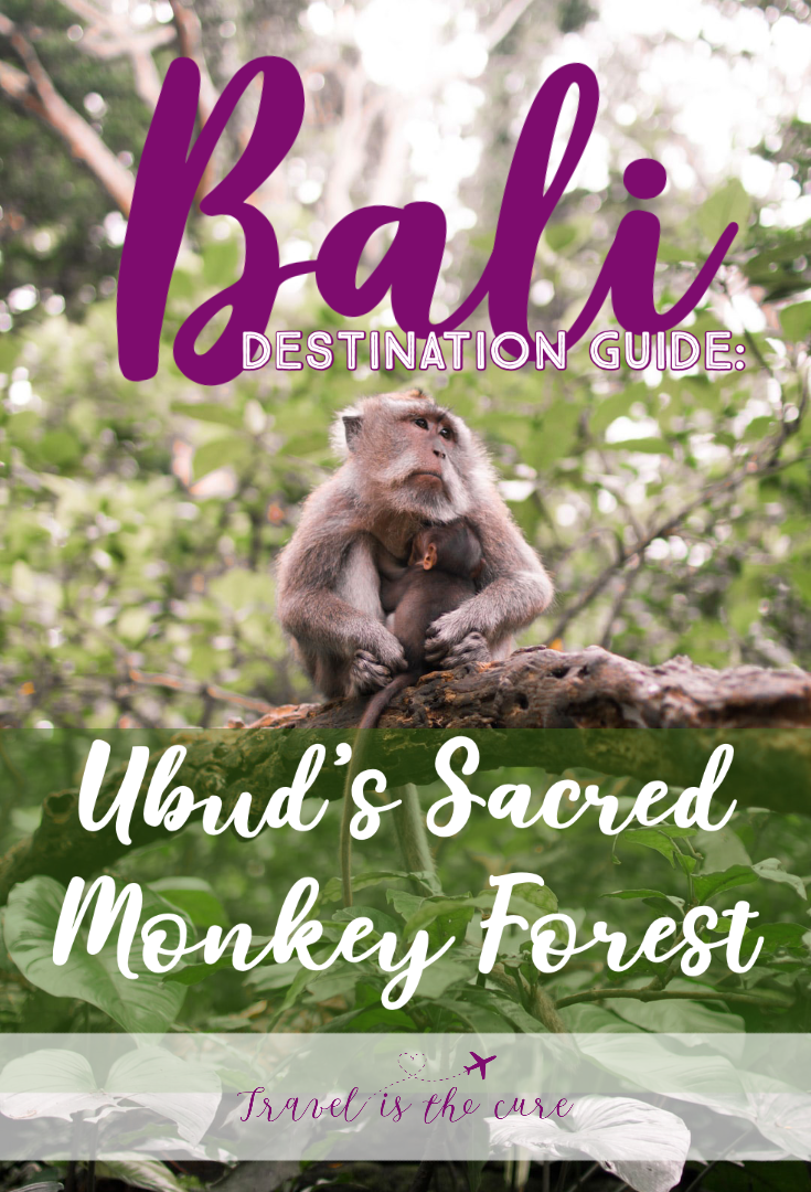 Destination Guide Bali Monkey Forest.png