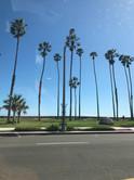 Palm-lined Beach