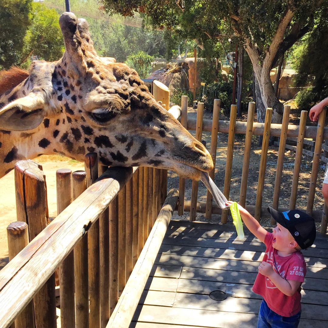 The SB Zoo