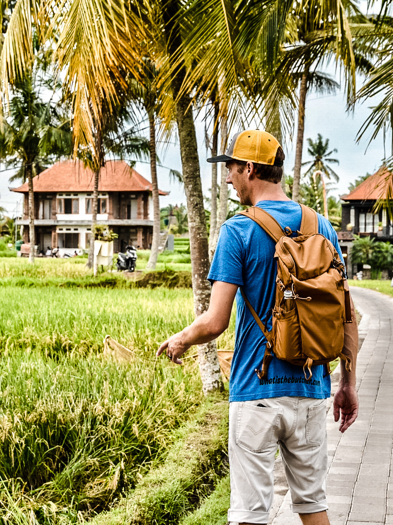 Walk through the ricefields from Ubud center
