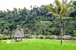The Rice Hut