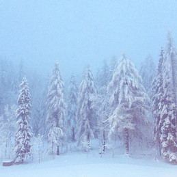 Early Morning Snow in Cortina d'Ampezzo