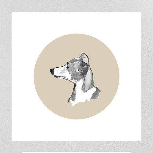 A Very Modern Dog Italian Greyhound
