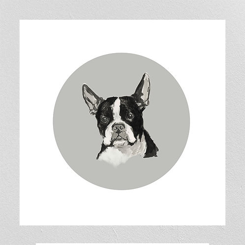 A Very Modern Dog Boston Terrier