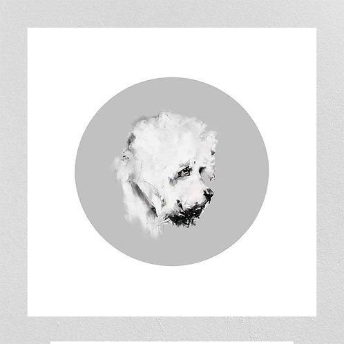 A Very Modern Dog Dandie Dinmont