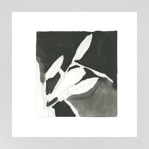 0006 Black & White