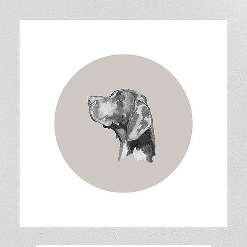 A Very Modern Dog German Pointer