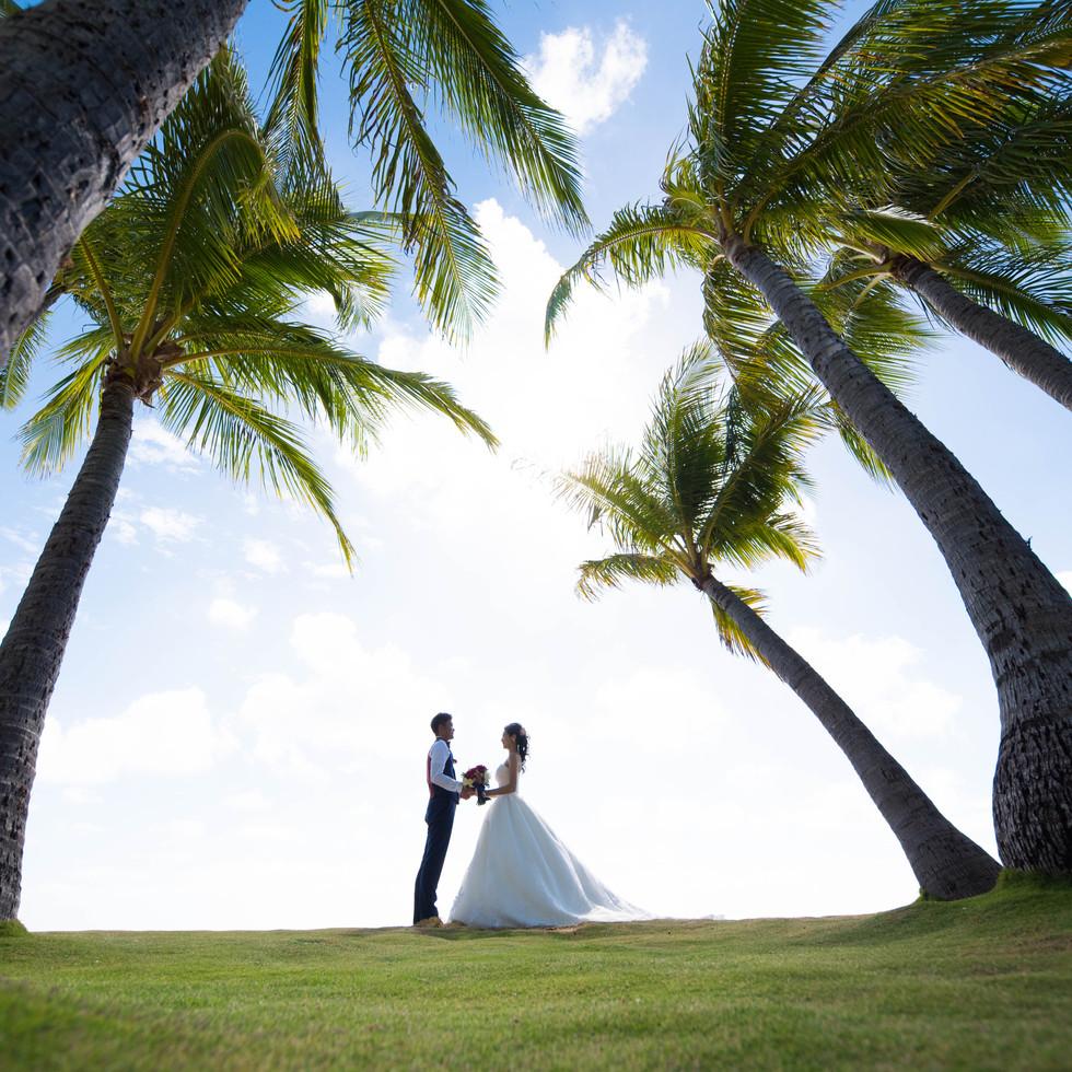 Wedding Palm Trees