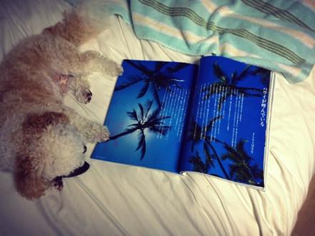 Fujingaho Magazine