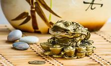 goldenfrog.webp