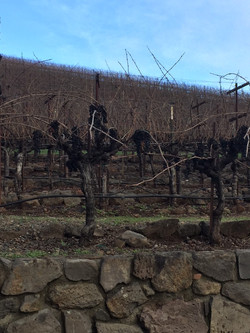 Kunde Family Winery Tour