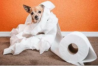 Paper Puppy.jpg