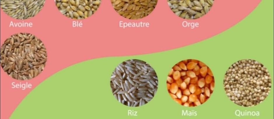 Féculents avec ou sans gluten