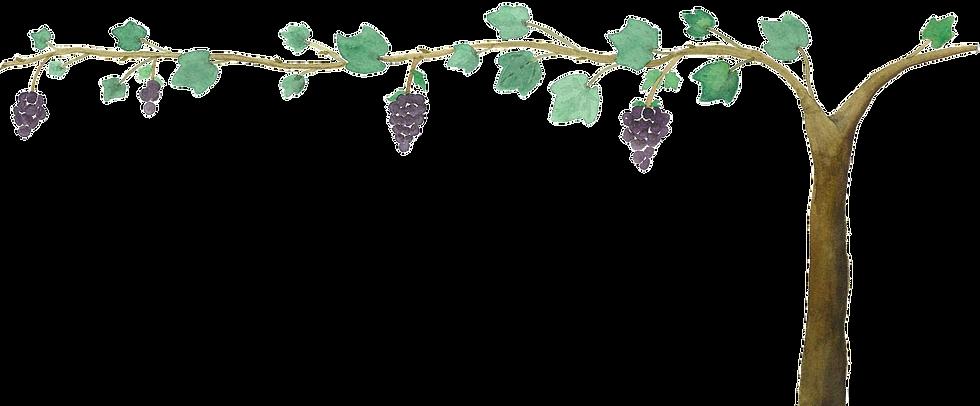 Grape Vine Watercolor Illustration