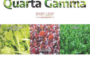 Catalogo Baby Leaf