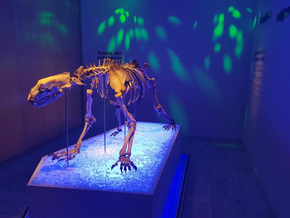 Uis, Arkeologisk Museum, Finnøybjørnen