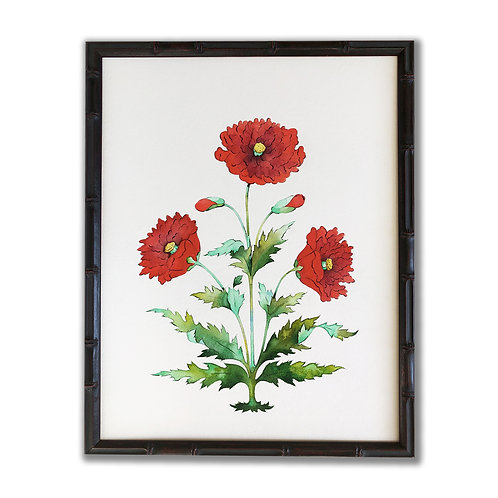 Original Painting of Red Mughal Poppy