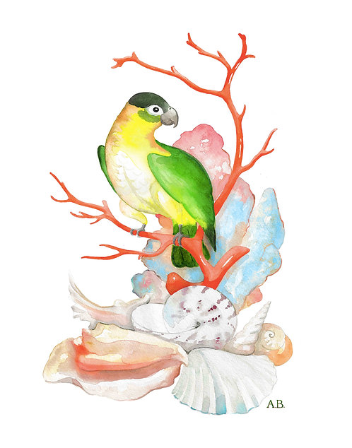 PARROT WITH CORAL