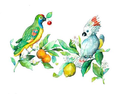 Amazon Parrot & Cockatoo