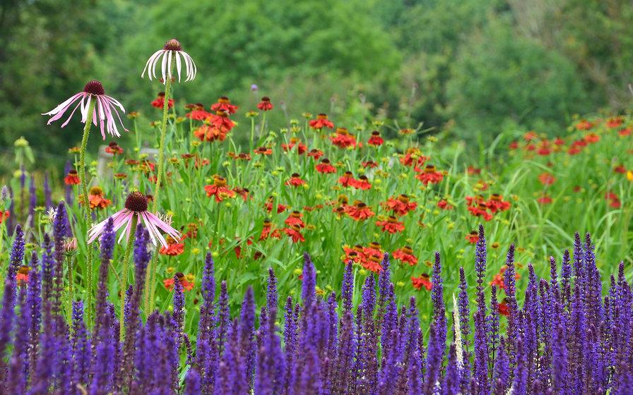 ollie neaves garden design