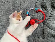 Jouet Chat chien Personnalisé avec surnom balle avec grelots