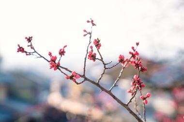 OSAKA KYOTO - DERRY AINSWORTH-2-29.jpg